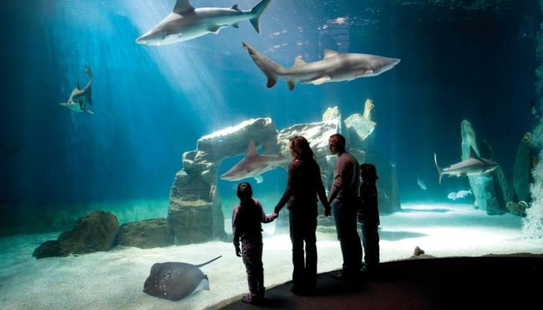 Posti belli da vedere assolutamente a Genova L'acquario di Genova